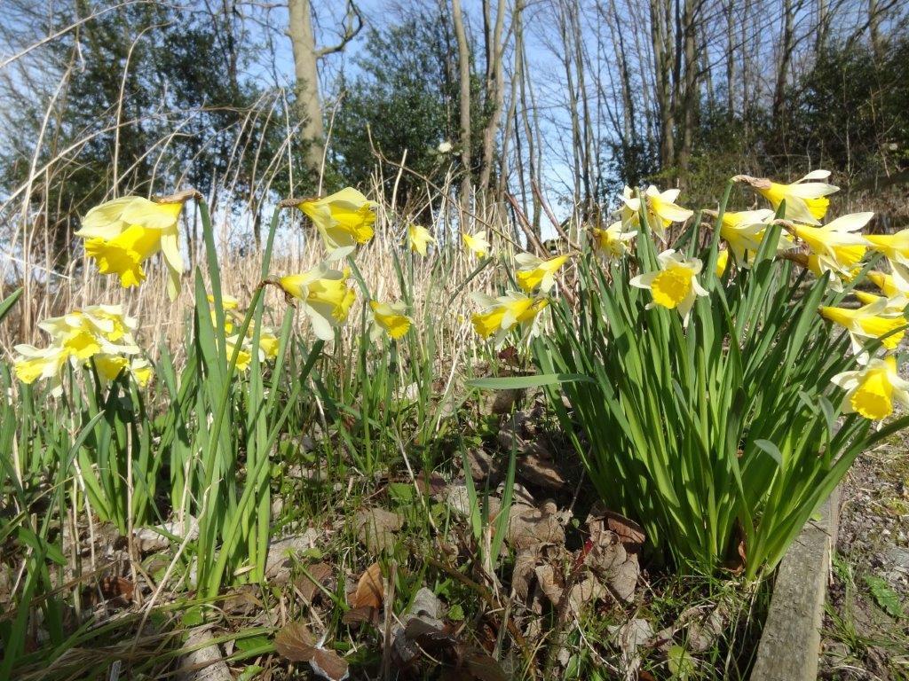 Sculptures in daffodils